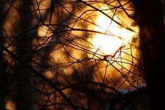le Web du coucher du soleil Photos stock