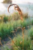 Le Web du ` s d'araignée Image stock