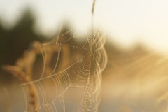 Le Web du ` s d'araignée au coucher du soleil Photographie stock libre de droits