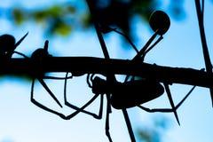 Le Web spider d'or image libre de droits