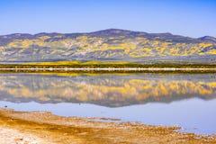 Le Wildflower a couvert des montagnes refl?t?es dans les eaux provisoires monument national de plaine soda de lac, Carrizo, la Ca images libres de droits