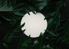 Le xanadu tropical exotique part avec le fond blanc de l'espace photo stock
