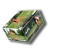 Le yoga à l'extérieur enferment dans une boîte le collage Photo libre de droits