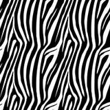 Le zèbre barre le modèle sans couture Copie de zèbre, peau d'animal, rayures de tigre, modèle abstrait, ligne fond, tissu Main ét illustration libre de droits