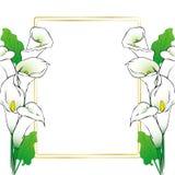 Le zantedeschia fleurit la carte Photos stock
