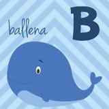 Le zoo mignon de bande dessinée a illustré l'alphabet avec les animaux drôles Alphabet espagnol : B pour Ballena illustration libre de droits