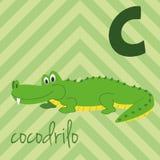 Le zoo mignon de bande dessinée a illustré l'alphabet avec les animaux drôles Alphabet espagnol : C pour Cocodrilo illustration stock
