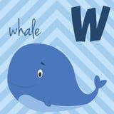 Le zoo mignon de bande dessinée a illustré l'alphabet avec les animaux drôles : W pour la baleine Photo stock