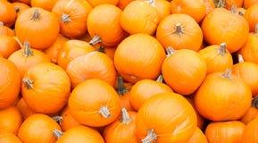 Le zucche arancioni video pronto per la vendita Fotografia Stock