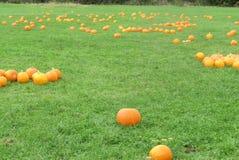 Le zucche aspettano, il Hampshire immagini stock libere da diritti