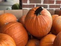 Le zucche cadono fondo stagionale di autunno fotografia stock libera da diritti