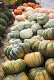 Le zucche commercializzano per il giorno di ringraziamento fotografia stock
