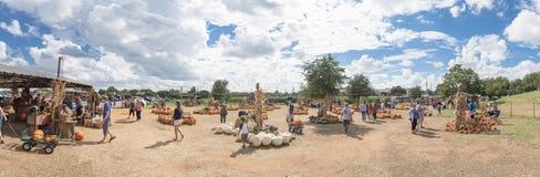 Le zucche panoramiche fanno il giardinaggio e la gente all'azienda agricola locale nel Texas, Ame fotografia stock