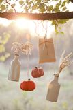 Le zucche raccolte decorano Fotografia Stock Libera da Diritti