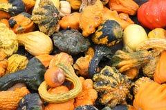 Le zucche variopinte al mercato Fotografie Stock