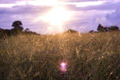 Lea die sunsets gelijk maken royalty-vrije stock afbeeldingen