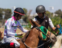 Lead Pony and Race Horse Stock Image