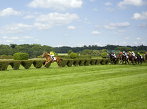 In the lead - winning gallop horse Stock Images