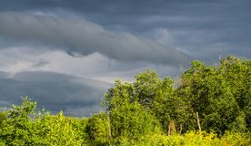 Leaden clouds over the forest. Leaden clouds are on the forest pouring rain Stock Image