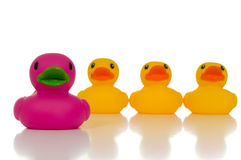 Leader. A pink rubber duck leading a group of yellow rubber ducks signifying that leaders must be unique and stand out from the crowd Stock Photos