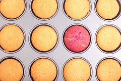 Leadership. Abstract leadership sown in cupcakes with one red cupcake Stock Photo