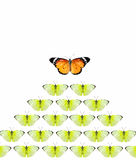 Leadership. Of butterfly isolate on white background Stock Photos