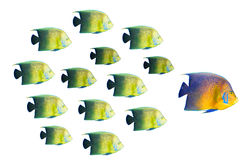 Leadership concept - big fish Stock Images