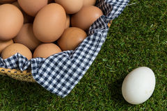 Leadership Concept : White egg is outstanding from the group of Royalty Free Stock Photography