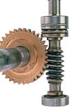 Leading gear wheel of conic type Royalty Free Stock Photos