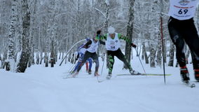 Leading group skiers uphill skate skiing in forest stock video