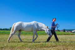 Leading horse Stock Images