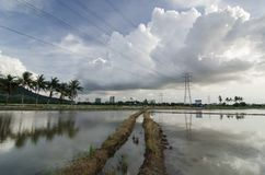 Leading line lead to coconut tree and electric tower. Stock Photography