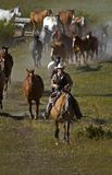 Leading them Home. Cowboy leads herd of horses home at the end of the day Royalty Free Stock Image