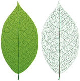 Leafåder Arkivbild