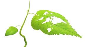 leaföversiktsvärld Arkivfoto