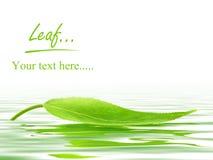 leaf över vatten Royaltyfri Foto