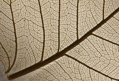 Leaf 1. Stock Photos