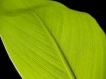 Leaf [1]. Green leaf over the black Royalty Free Stock Image