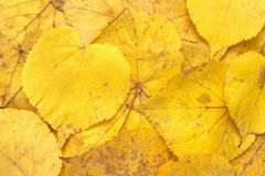 Leaf 10 Royalty Free Stock Photography
