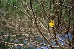 Leaf. Yellow birch leaf in the empty tree branches Royalty Free Stock Photos