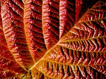 Leaf. Royalty Free Stock Images
