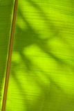 Leaf. A leaf abstract image with shadows Stock Photo