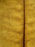Leaf. A closeup of a dry leaf stock photos