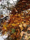 Leaf湖 图库摄影