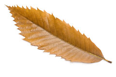Free Leaf Stock Images - 11972584