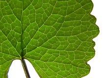 Leaf. Closeup stock image
