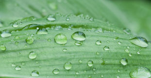Leaf. Droplets on a leaf made of 9 pictures to  get a good depth of field Royalty Free Stock Image