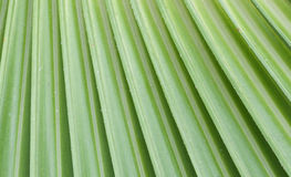Leaf. A close-up of palm leaf Royalty Free Stock Images