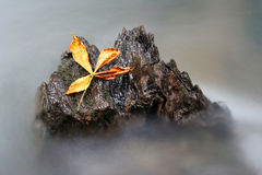 Leaf. A leaf on a rock in a river Royalty Free Stock Photography