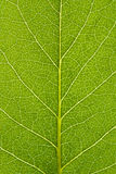 Leaf. Of a plant close up Royalty Free Stock Images